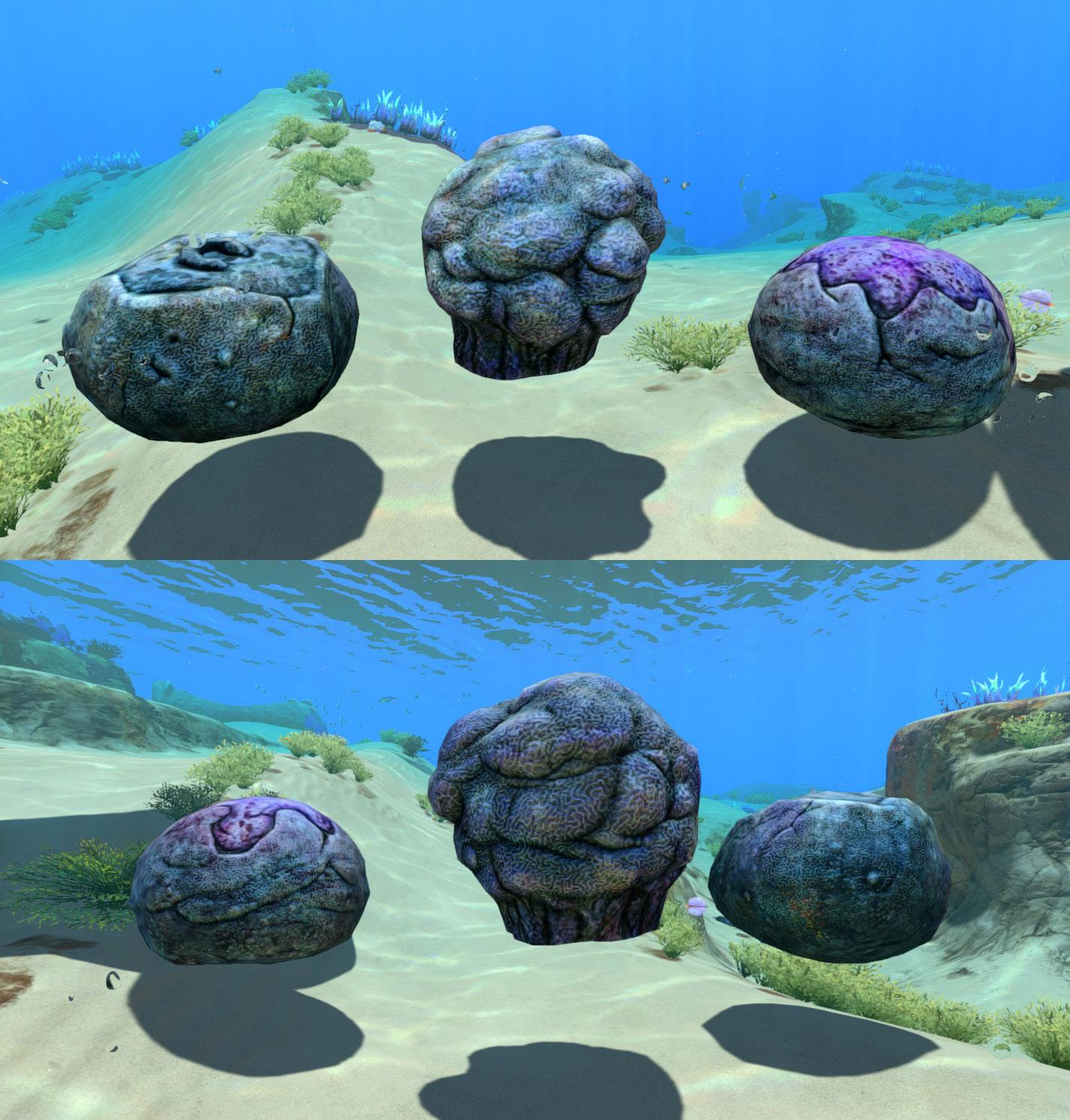 reefback_corals.jpg