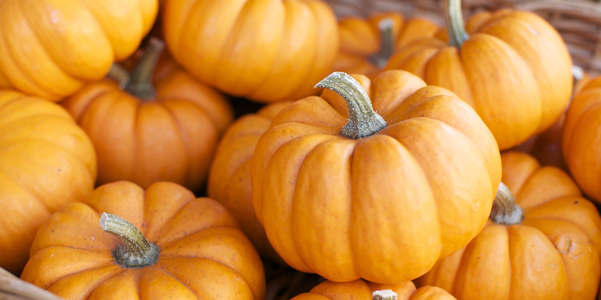 pumpkins!.jpg