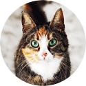 Köp allt för katt online på Granngården.se