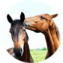 Köp allt för häst online på Granngården.se