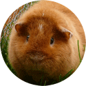 Köp allt för smådjur online på Granngården.se