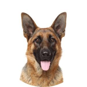Köp allt för hund online på Granngården.se