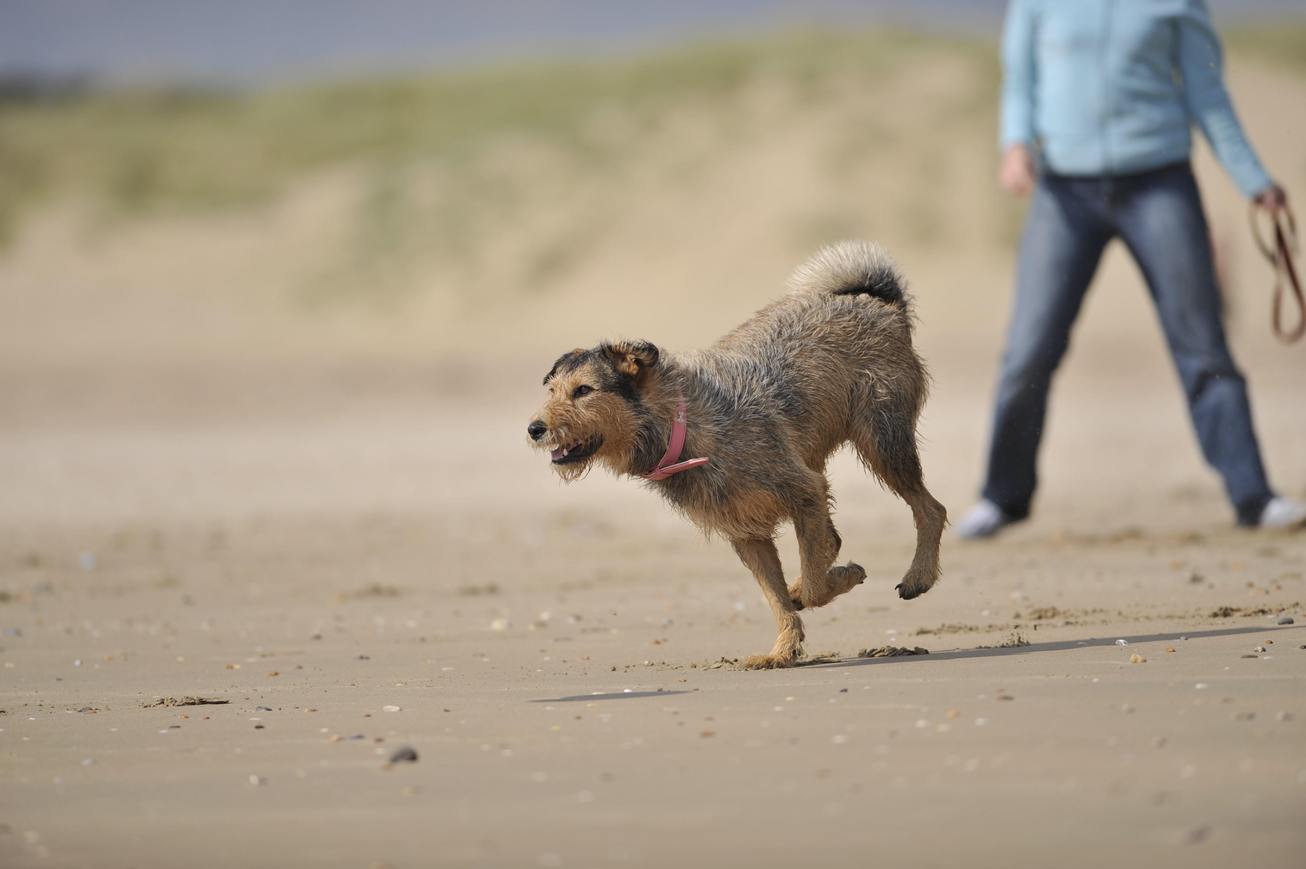 Dogknows Dog Care franchise