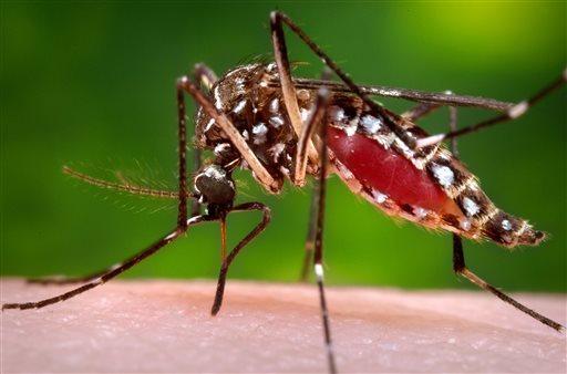 ជម្ងឺ Zika បានរាតត្បាតទៅដល់ប្រទេសចិនជាលើកទីពីរ