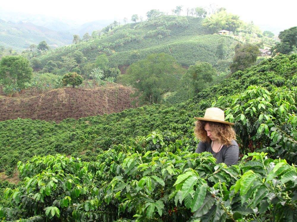 Picking Colombia coffee on a plantation