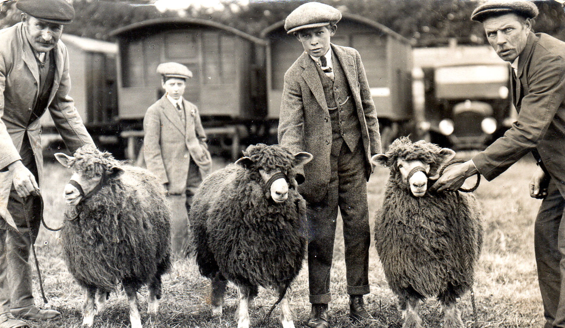 ram lambs for sale royal 1928 ernest addison.jpg