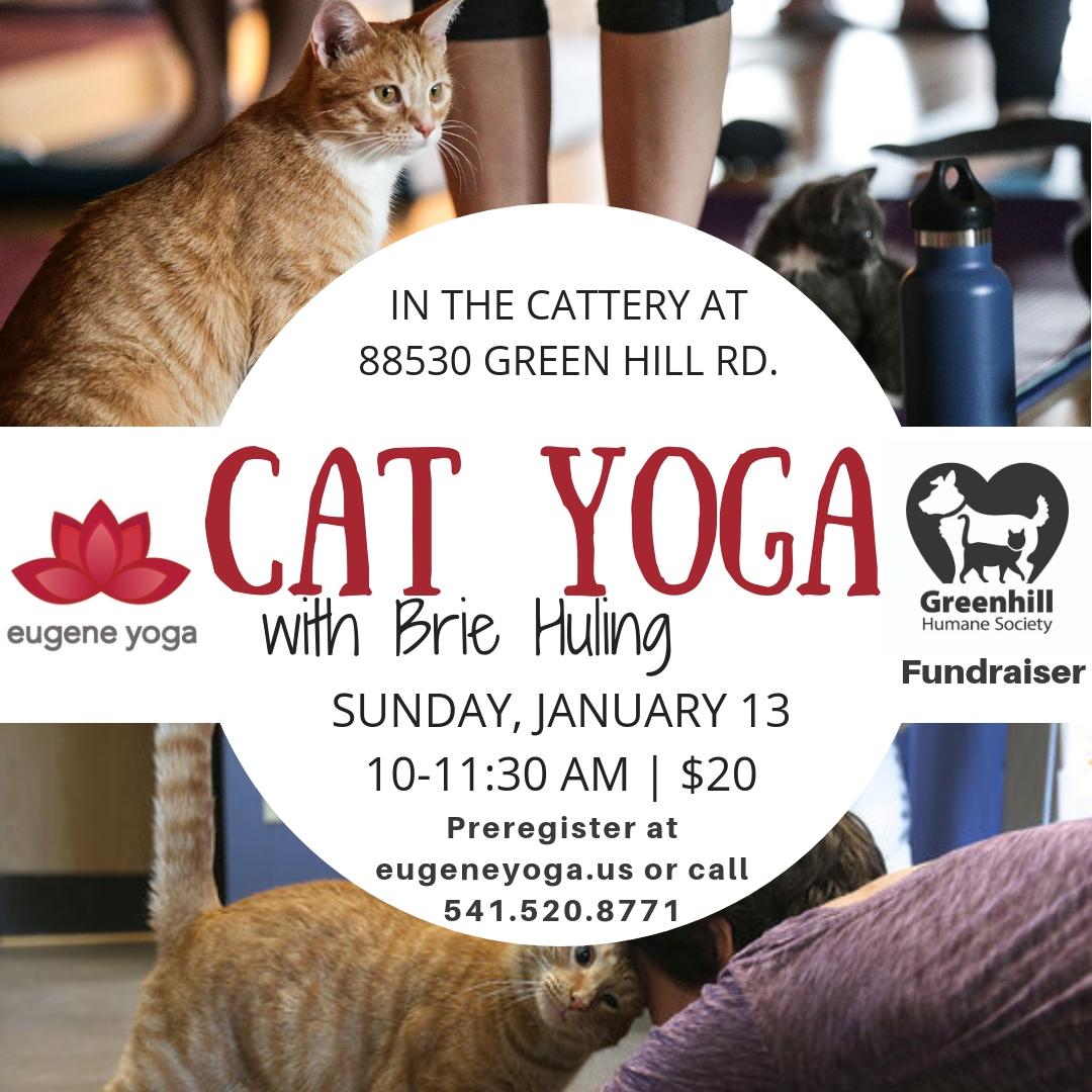 1.13 Cat Yoga w Brie.jpg