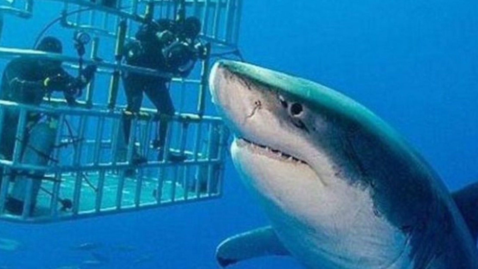 This Is The Biggest Great White Shark Ever Caught On Camera