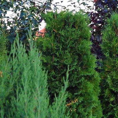 shrubs_400.jpg