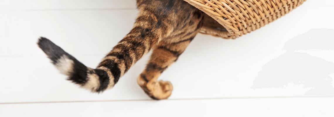Köp kattmat, kattgodis, kattleksaker,kattsand, kattlådor, klösträd och annat för katt online eller i butik hos Granngården!