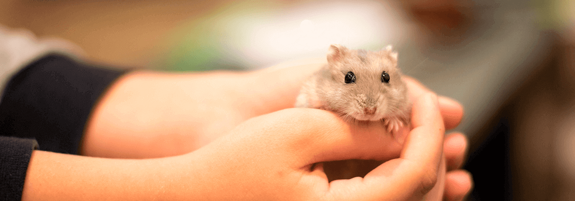 Köp smådjursfoder, kaninfoder, gnagarfoder, smådjursgodis och mer för smådjur online eller i butik hos Granngården!