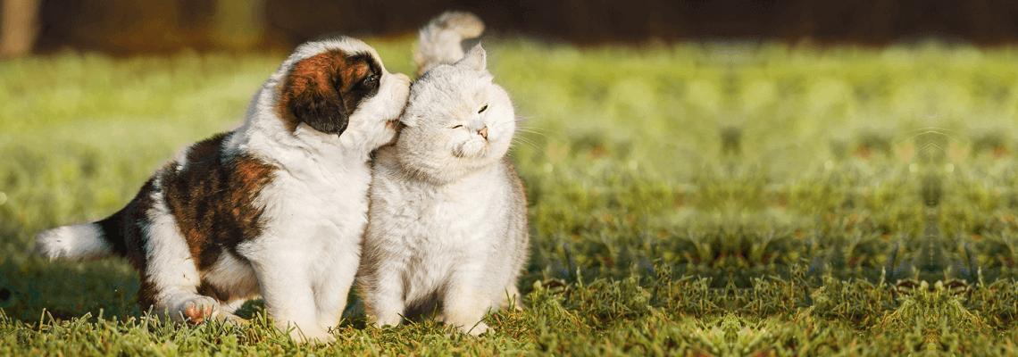 Köp produkter för husdjur som hund, katt och gnagare online eller i butik hos Granngården!