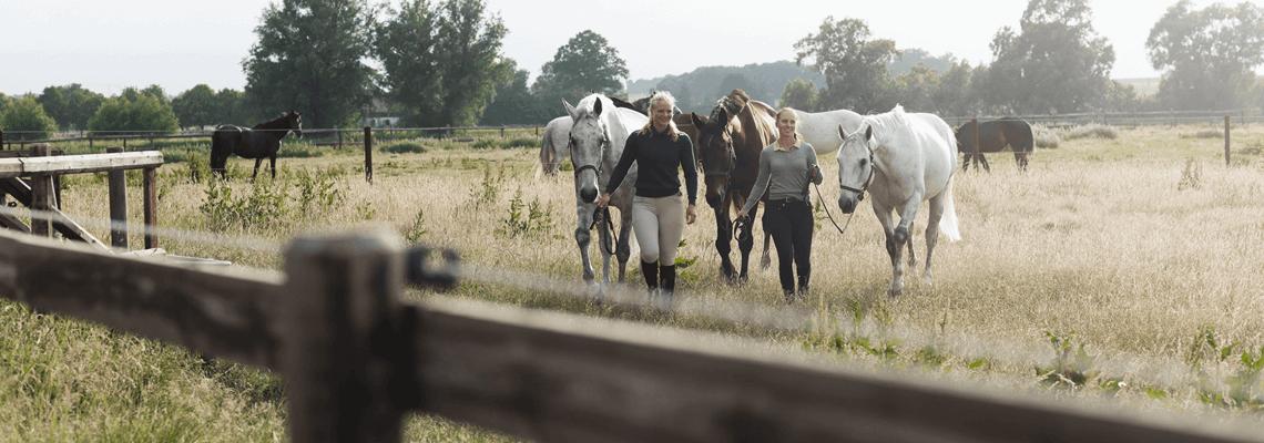Köp produkter för häst och ryttare som hästutrustning och ridkläder online eller i butik hos Granngården!