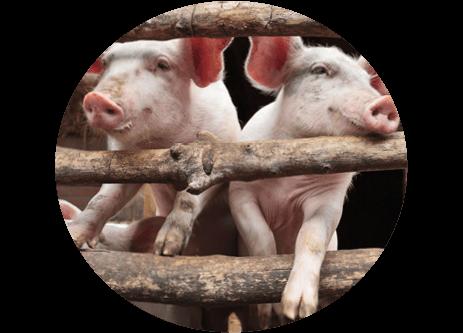 Köp grisfoder online på granngården.se