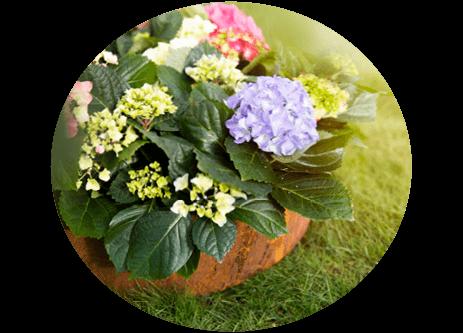 Köp växter som häckar, prydnadsbuskar och perenner online på granngården.se