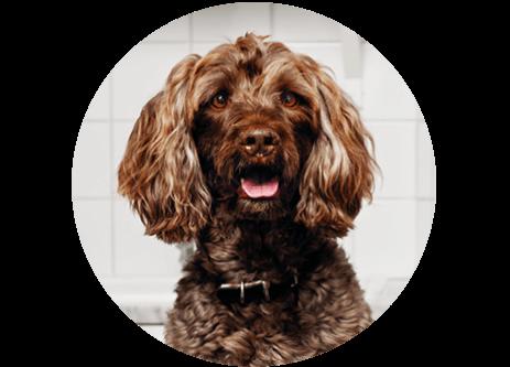 Köp produkter för hund och hundtillbehör online på granngården.se