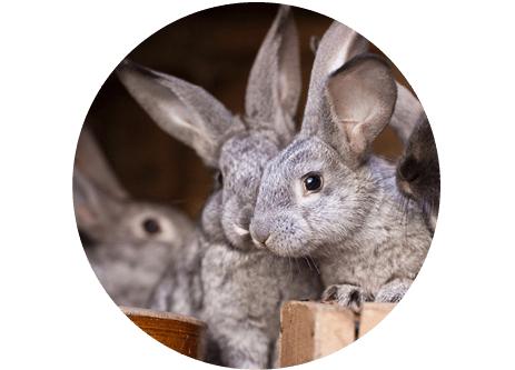 Köp produkter för smådjur och gnagare online på granngården.se