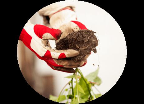 Köp produkter för odling och plantering online på granngården.se
