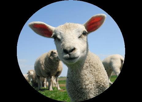 Köp getfoder och fårfoder online på granngården.se