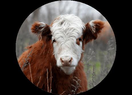 Köp ko- och nötfoder online på granngården.se