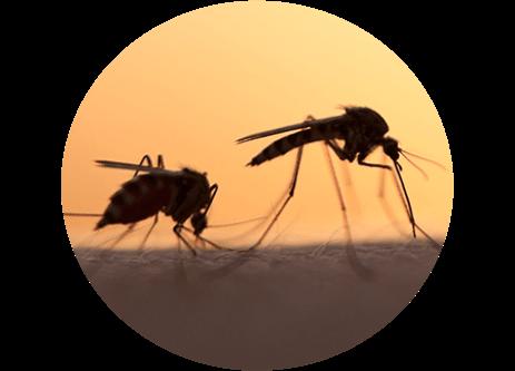 Köp skadedjursbekämpning som myggfångare, insektsskydd och myrmedel online på granngården.se