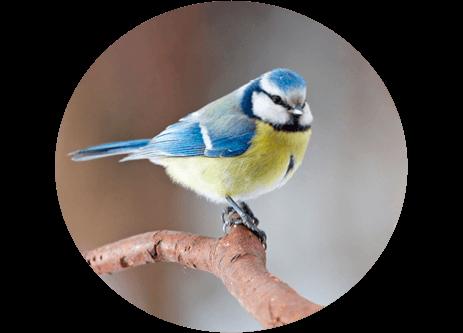 Köp småfågelmat, fågelmatare och fågelholkar online på granngården.se