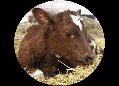 Köp produkter för djurvård, kalvning, lamning, fölning och grisning online på granngården.se