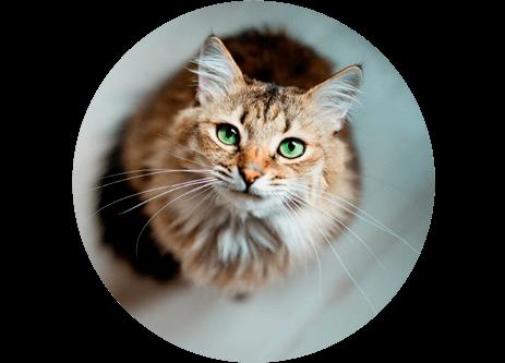 Köp produkter för katt och kattillbehör online på granngården.se