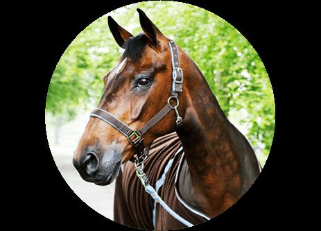 Köp hästutrustning online på granngården.se