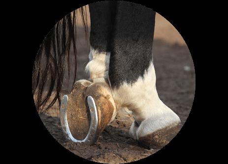 Köp hästskor och hovslagar-produkter online på granngården.se