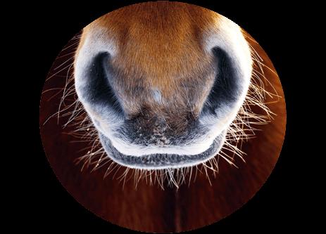 Köp hästfoder online på granngården.se
