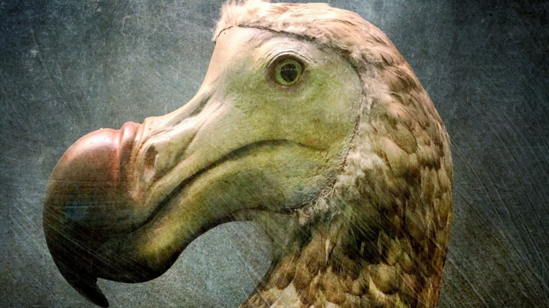 Scientists Finally Know The Real Reason Dodo Birds Went Extinct