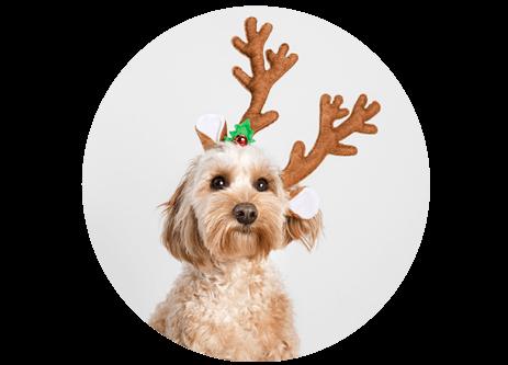 Julklappstips och julklappar till hunden online på granngården.se