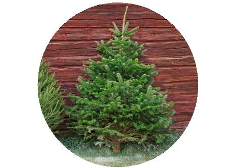 Köp julgranar online på granngården.se