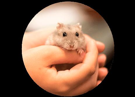 Julklappar till smådjur som kanin, hamster och marsvin online på granngården.se