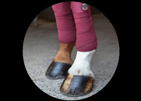 Köp ridjackor och ridvästar online på granngården.se