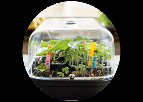 Köp miniväxthus, drivhus och drivbänk online på granngården.se