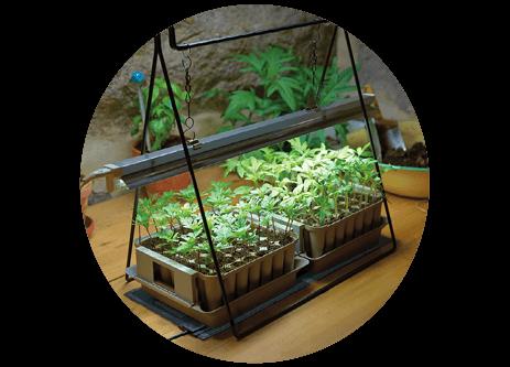 Köp växtbelysning online på granngården.se