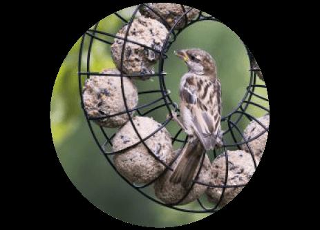 Köp fågelmat till småfåglar online på granngården.se