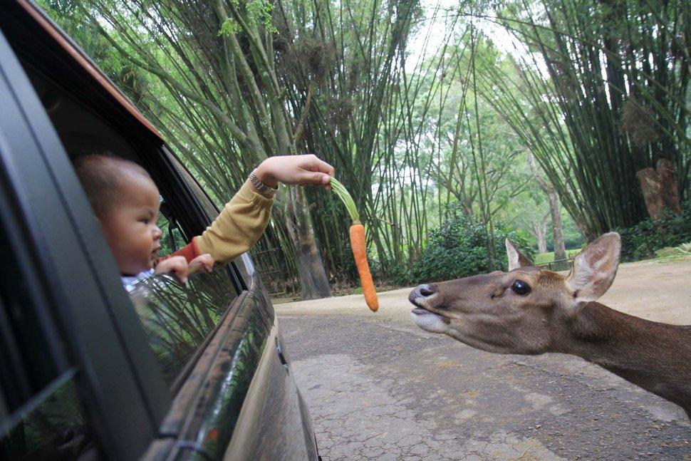 tips ke taman safari bogor
