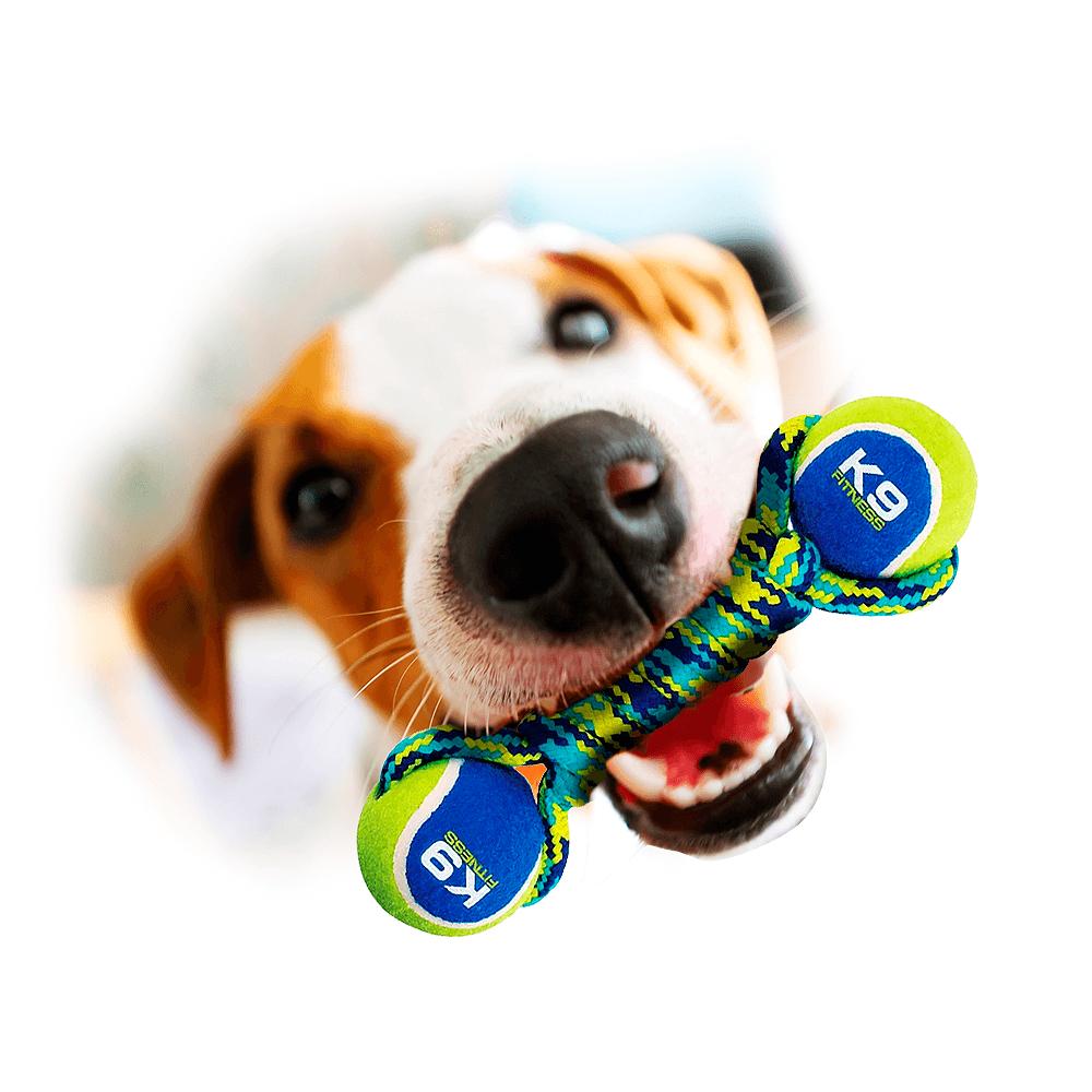 Brinquedos para Cães