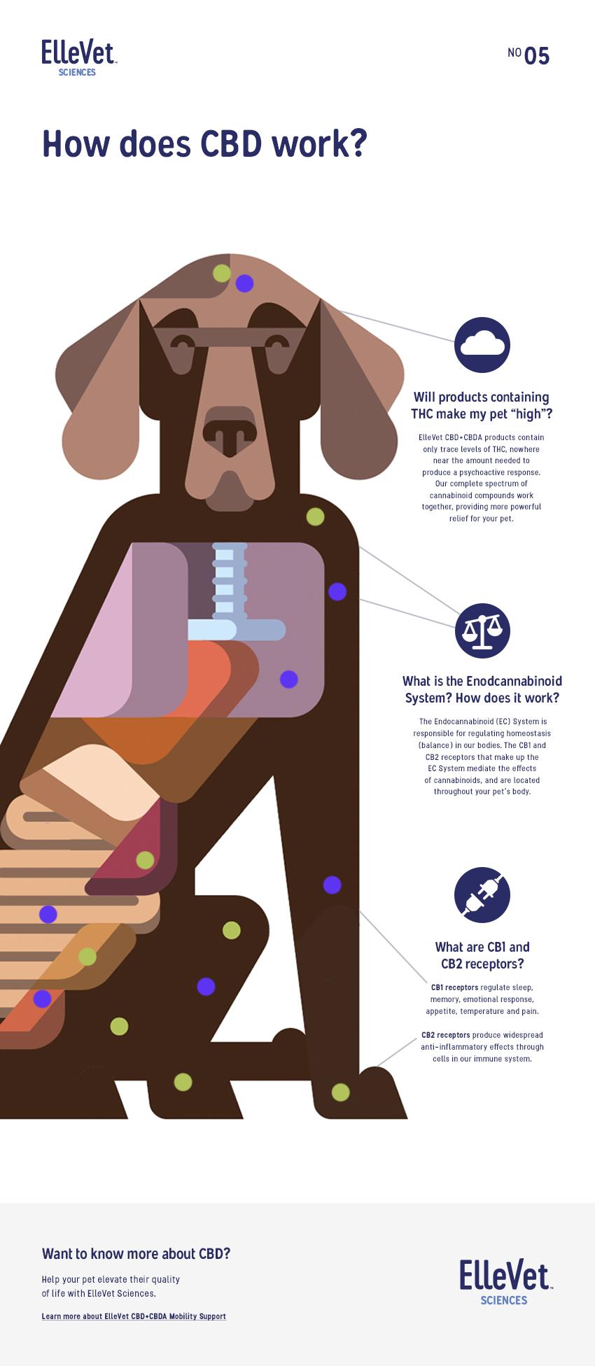Ellevet_Infographic_#5_v3_WIP.png