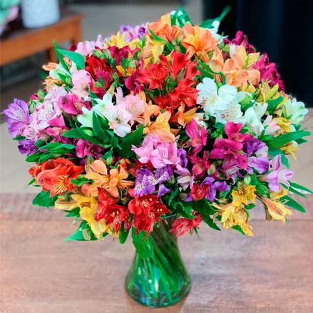 Luxuosas Astromélias Coloridas no Vaso