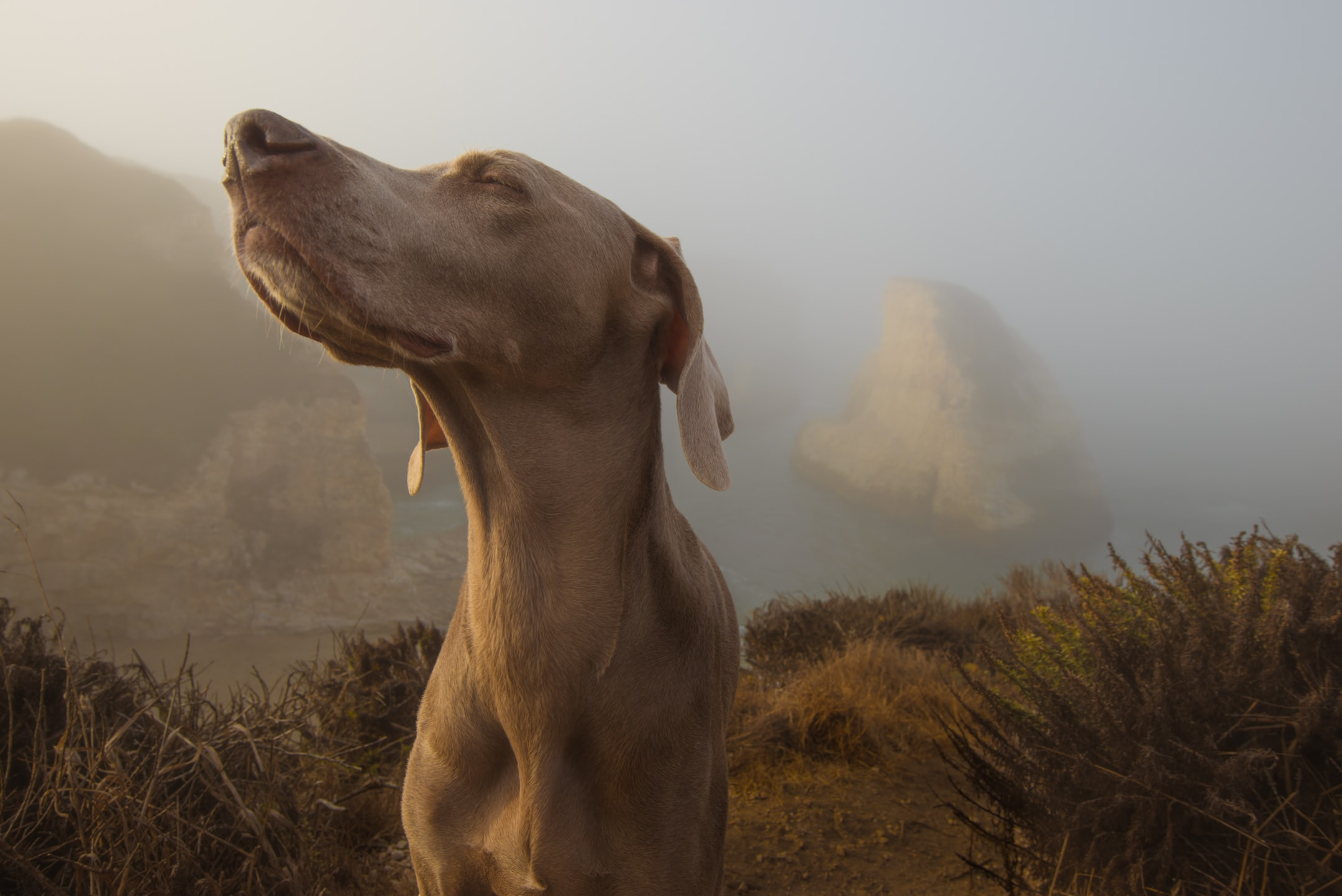 dog smelling the air Photo by Jeff Nissen on Unsplash