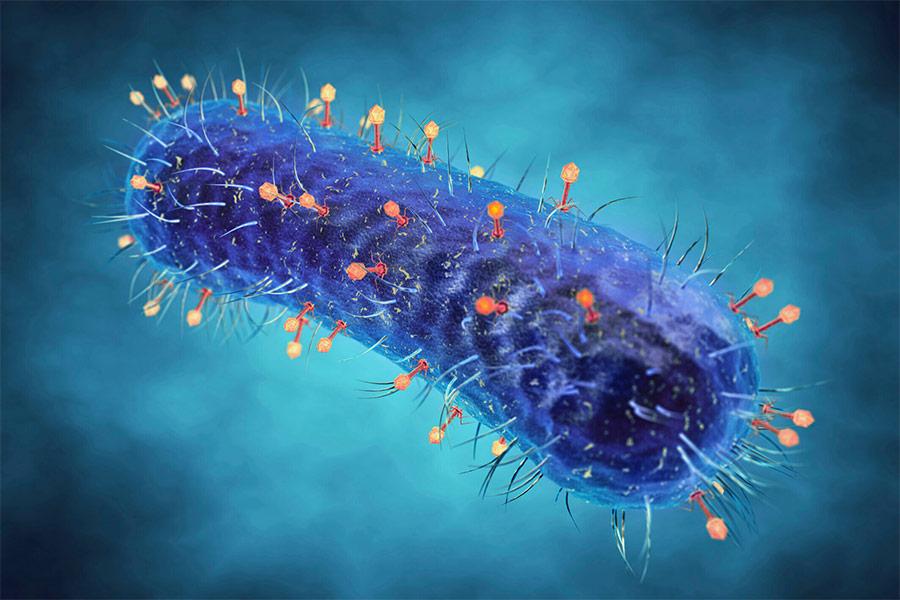 Diyabetik Ayak Yaralarında Bakteriyofaj Tedavisi