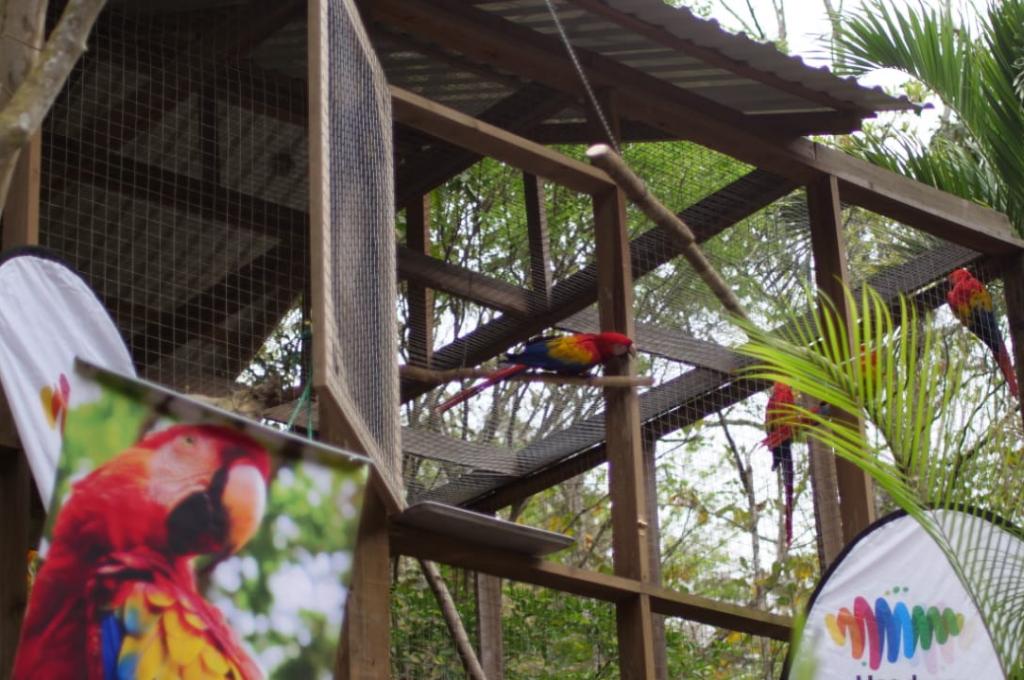 Liberación de Guacamayas (2).png