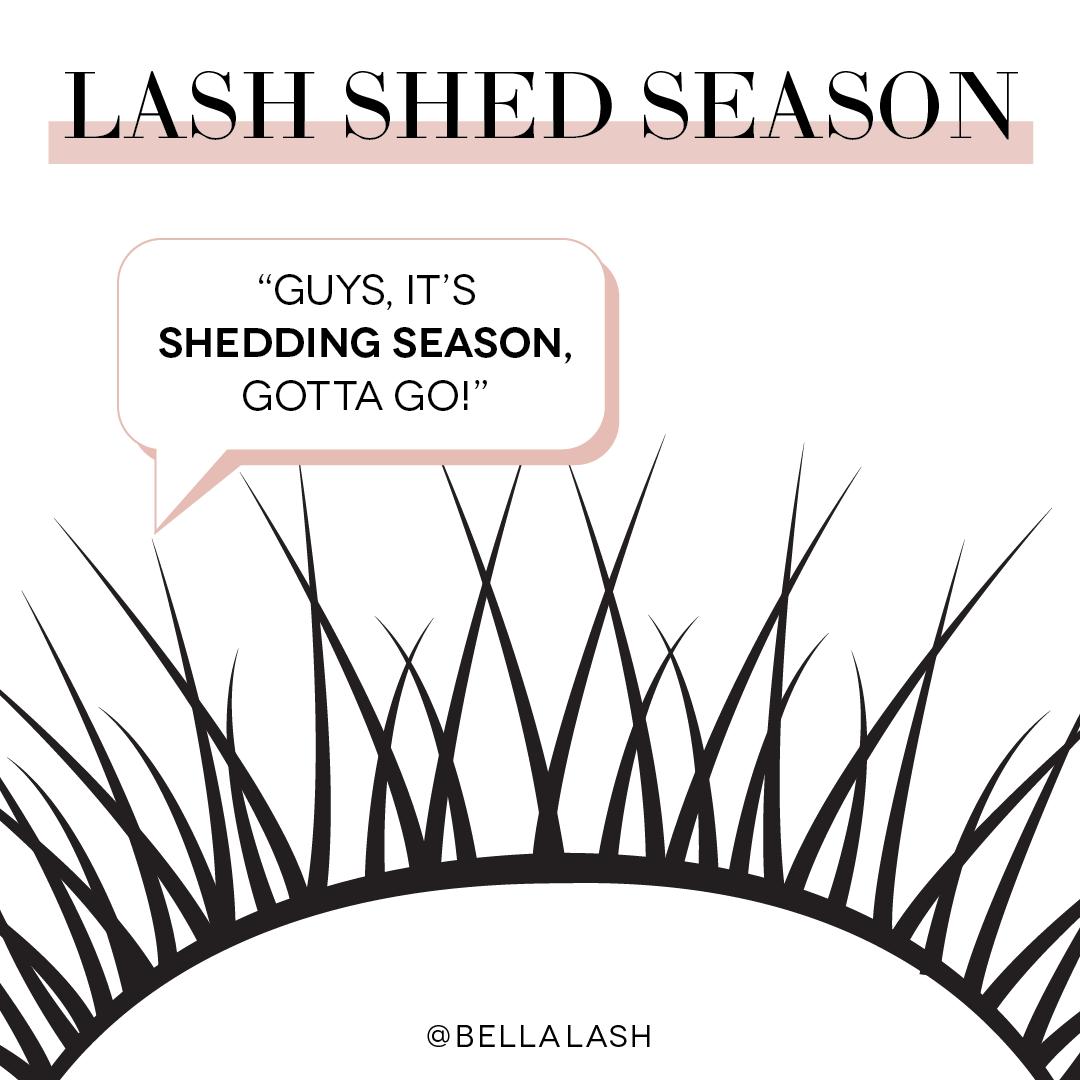 LashShedSeason-01.png