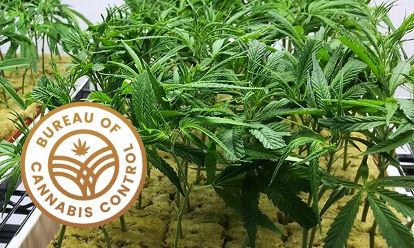 The Bureau of Cannabis Control.jpg